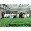 智能温室专业建设厂家,智能温室建造