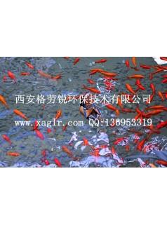 供应景观鱼池净化一体化设备厂家