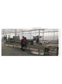 全自动育苗播种机 穴盘蔬菜育苗生产线 花卉点籽机